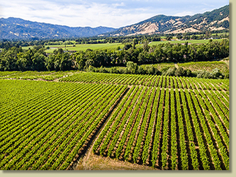 Redwood Valley and Vineyard Real Estate, The Landlady - 1900 Road D