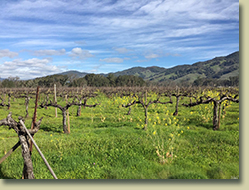 Ukiah Real Estate Sold by Cindy Lindgren -The Landlady, Lolonis Lane Vineyard